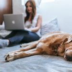 Woman working at home with dog on bed